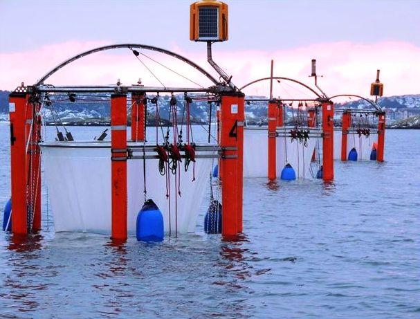 Oceanos estão mais quentes, ácidos e com menos oxigênio, diz relatório